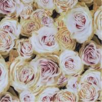 Велюр Rose 01